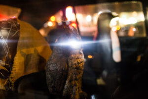 new york car animals street photography usa stylianos papardelas traveling photographer